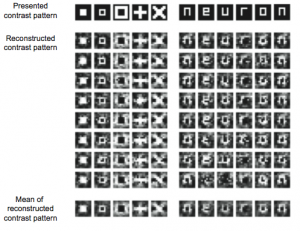 visual-image-reconstruction-from-fmri